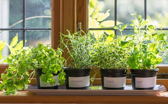 mini jardim de temperos : mini jardim de temperos:Cozinhar com temperos frescos não é exclusividade de quem mora em